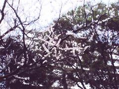 【写真】桜!!